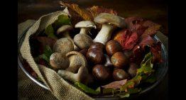 Funghi e castagne in valle
